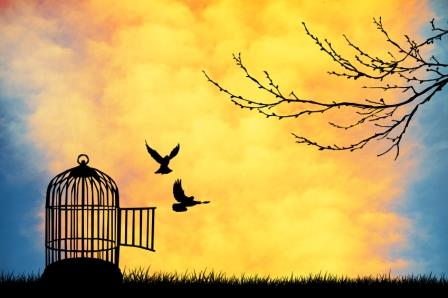 EMDR Therapy – freedom