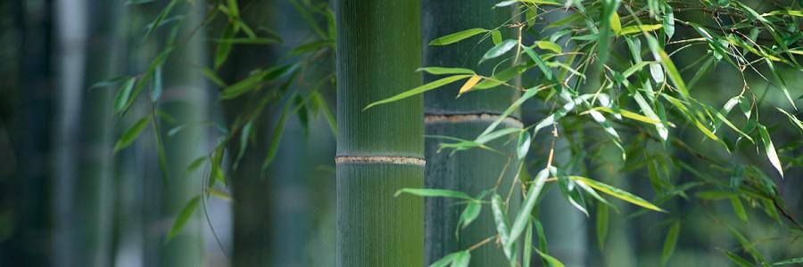 Green Bamboo Yamaguchi, Japan