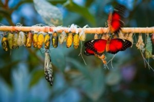 life transitions and changes - butterflies and cocoons
