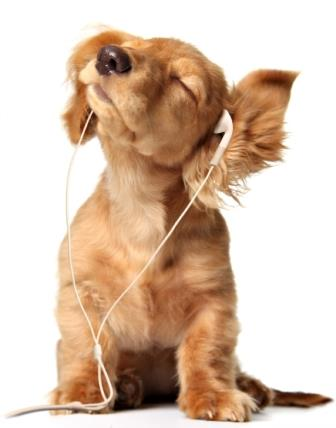 harness the power of music – puppy