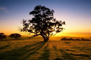 Re-enchantment of everyday life - outback dawn