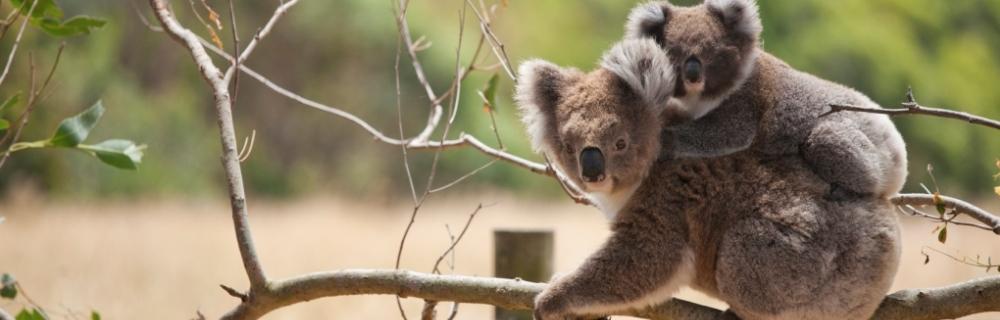 Need Parenting Help in Brisbane?