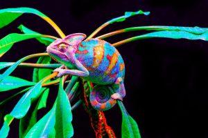 Reptile Phobia